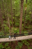 Bay-of-Plenty-Region;bridge;bridges;canopy-walk;eco_tourism;ecotourism;elevated-walkway;foot-bridge;foot-bridges;footbridge;footbridges;N.I.;N.Z.;New-Zealand;NI;North-Is;North-Island;Nth-Is;NZ;pedestrian-bridge;pedestrian-bridges;people;person;redwood;Redwood-Forest;redwood-tree;redwood-trees;redwoods;Redwoods-Forest;Redwoods-Treewalk;Rotorua;suspension-bridge;suspension-bridges;swing-bridge;swing-bridges;The-Redwoods;tourism;tourist;tourists;tree-trunk;tree-trunks;Treetop-walk;Treewalk;trunk;trunks;Whakarewarewa-Forest;wire-bridge;wire-bridges