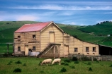 historical;building;barns;wool-shed;woolshed;woolsheds;sheds;sheep;farm;farms;farming;paddock;paddocks;field;fields;pasture;pastures;agriculture;rural;wool;lamb;grass