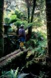 tramper;tramping;hesitate;hesitation;pause;scene;appreciate;appreciation;nature;natural;log;bridge;bridges;mossy;ferns;bush;forest;native;natives;native-bush;guide;tracks;alone;one;person;tourist;beauty;flora;new-zealand;hike;hiking;outdoors;relaxation;pleasure;leisure;man