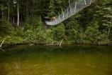 beech-forest;bridge;bridges;bush;foot-bridge;foot-bridges;footbridge;footbridges;forest;hiking-track;hiking-tracks;male;man;N.Z.;native-bush;New-Zealand;NZ;pedestrian-bridge;pedestrian-bridges;people;person;Piano-Flat;river;rivers;S.I.;SI;South-Is;South-Island;Southland;Sth-Is;suspension-bridge;suspension-bridges;swing-bridge;swing-bridges;track;tracks;Waikaia-Forest;Waikaia-River;Waikaia-Valley;walker;walkers;walking-track;walking-tracks;wire-bridge;wire-bridges
