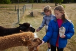 agricultural;agriculture;alpaca;alpacas;animal;animals;boy;boys;brother;brothers;child;children;country;countryside;domestic-animals;farm;farm-animal;farm-animals;farming;farmland;farms;feed;feeding;field;fields;fur;girl;girls;Herbivore;Herbivores;Herbivorous;kid;kids;lama;little-boy;little-boys;little-girl;little-girls;Livestock;mammal;mammals;meadow;meadows;Mossburn;Mossburn-Country-Park;N.Z.;new-zealand;NZ;paddock;paddocks;pasture;pastures;rural;S.I.;SI;sibling;siblings;sister;sisters;South-Is;South-Island;Southland;Sth-Is;stock;wooly