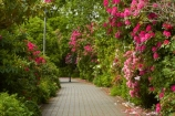 5841;bloom;blooms;botanic-garden;botanic-gardens;botanical-garden;botanical-gardens;floral;flowers;garden;gardens;invercargill;invercargill-botanic-garden;island;N.Z.;new;new-zealand;NZ;park;Queens-Park;Queens-Park-Gardens;Queens-Pk;queens;Queens-Park;Queens-Park-Gardens;Queens-Pk;rhododendron;rhododendron-dell;S.I.;season;seasonal;seasons;SI;south;South-Is;South-Island;Southland;spring;spring-time;spring_time;springtime;Sth-Is.;zealand