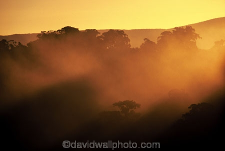 mist;fog;weatherm-tree;trees;forest;forestry;forests;dusk;sunlight;ray;rays;color;colour;colours;colors;light;sun