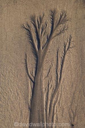 abstract;beach;beaches;coast;coastal;coastline;coastlines;coasts;erosion;N.I.;N.Z.;New-Plymouth;New-Zealand;NI;North-Is;North-Is.;North-Island;NZ;sand-pattern;sand-patterns;sand-tree;sand-trees;shore;shoreline;shorelines;shores;Taranaki