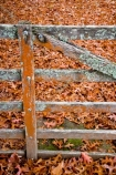 arboretum;arboretums;autuminal;autumn;autumn-colour;autumn-colours;autumnal;color;colors;colour;colours;deciduous;fall;Forgotten-World-Highway;leaf;leaves;N.I.;N.Z.;New-Zealand;NI;North-Island;NZ;oak;oak-tree;oak-trees;oaks;season;seasonal;seasons;Taranaki;Te-Wera;Te-Wera-Arboretum;The-Forgotten-World-Highway;tree;trees