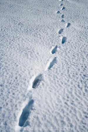 alpine;central-plateau;cold;foot-print;foot-prints;foot-step;foot-steps;foot-trail;foot-trails;footprint;footprints;footstep;footsteps;freeze;freezing;hole;holes;Mount-Ruapehu;Mountain;mountainous;mountains;mt;Mt-Ruapehu;mt.;Mt.-Ruapehu;N.I.;N.Z.;New-Zealand;NI;North-Island;NZ;ruapehu-district;Scoria-Flat;Scoria-Flats;season;seasonal;seasons;snow;snowing;snowy;Tongariro-N.P.;Tongariro-National-Park;Tongariro-NP;track;tracks;trail;trails;volcanic;volcanic-plateau;volcano;volcanoes;white;winter;wintery;World-Heritage-Area;World-Heritage-Areas;World-Heritage-Site;World-Heritage-Sites