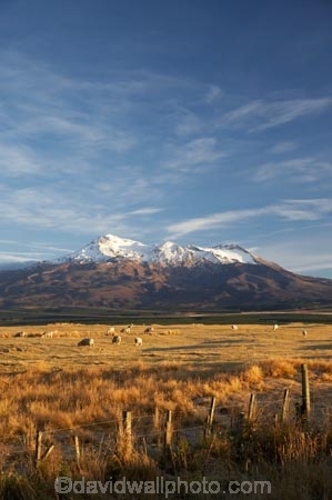 agricultural;agriculture;alpine;central-plateau;country;countryside;farm;farming;farmland;farms;field;fields;meadow;meadows;Mount-Ruapehu;Mountain;mountainous;mountains;mt;Mt-Ruapehu;mt.;Mt.-Ruapehu;N.I.;N.Z.;New-Zealand;NI;North-Island;NZ;paddock;paddocks;pasture;pastures;ruapehu-district;rural;sheep;snow;Tongariro-N.P.;Tongariro-National-Park;Tongariro-NP;volcanic;volcanic-plateau;volcano;volcanoes;World-Heritage-Area;World-Heritage-Areas;World-Heritage-Site;World-Heritage-Sites