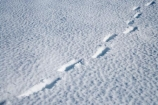 alpine;central-plateau;cold;foot-print;foot-prints;foot-step;foot-steps;foot-trail;foot-trails;footprint;footprints;footstep;footsteps;freeze;freezing;hole;holes;Mount-Ruapehu;Mountain;mountainous;mountains;mt;Mt-Ruapehu;mt.;Mt.-Ruapehu;N.I.;N.Z.;New-Zealand;NI;North-Island;NZ;ruapehu-district;Scoria-Flat;Scoria-Flats;season;seasonal;seasons;snow;snowing;snowy;Tongariro-N.P.;Tongariro-National-Park;Tongariro-NP;track;tracks;trail;trails;volcanic;volcanic-plateau;volcano;volcanoes;white;winter;wintery;World-Heritage-Area;World-Heritage-Areas;World-Heritage-Site;World-Heritage-Sites