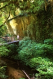 bridges;creek;creeks;fern;ferns;flora;forest;forestry;forests;green;hike;hiking;lush;native-bush;natural;nature;outdoor;outdoors;river;rivers;tourism;tourist;track;tracks;undergrowth;walk;walking;watercourse;waterway