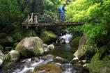 beautiful;beauty;bridge;bridges;brook;brooks;bush;cascade;cascades;creek;creeks;doc;endemic;fern;ferns;foot-bridge;foot-bridges;footbridge;footbridges;forest;forests;green;hike;hiker;hikers;hiking;hiking-track;hiking-tracks;Kaimai-Ranges;lush;Matamata;moss;native;native-bush;native-forest;natives;natural;nature;New-Zealand;north-is.;north-island;northland;pedestrian-bridge;pedestrian-bridges;ponga;punga;rain-forest;rain-forests;rain_forest;rain_forests;rainforest;rainforests;rapid;rapids;river;rivers;scene;scenic;stream;streams;swing-bridge;swing-bridges;timber;tracks;tramp;tramper;trampers;tramping;tree;tree-fern;tree-ferns;tree-trunk;tree-trunks;trees;trek;treker;trekers;treking;trekker;trekkers;trekking;trunk;trunks;verdant;Waikato;Wairere-Falls;Wairere-Falls-Scenic-Reserve;wairere-stream;walk;walker;walkers;walking;walking-track;walking-tracks;wire-bridge;wire-bridges;wood;woods