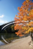 autuminal;autumn;autumn-colour;autumn-colours;autumnal;bridge;bridges;color;colors;colour;colours;deciduous;fall;Hamilton;leaf;leaves;N.I.;N.Z.;New-Zealand;NI;North-Island;NZ;orange;river;rivers;season;seasonal;seasons;tree;trees;Victoria-Bridge;Waikato;Waikato-River