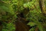 brook;brooks;bush;creek;creeks;fern;ferns;green;green-lush;lush;Mangapohue-Natural-Bridge;Mangapohue-Stream;N.Z.;native-bush;native-forest;New-Zealand;North-Is;North-Island;Nth-Is;NZ;stream;streams;verdant;Waikato;Waikato-Region;Waitomo-District