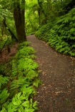 bush;green-lush;Mangapohue-Natural-Bridge;N.Z.;native-bush;native-forest;New-Zealand;North-Is;North-Island;Nth-Is;NZ;track;tracks;verdant;Waikato;Waikato-Region;Waitomo-District;walking-track;walking-tracks