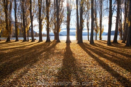 autuminal;autumn;autumn-colour;autumn-colours;autumn-leaves;autumnal;avenue;avenues;Central-Otago;color;colors;colour;colours;deciduous;fall;golden;lake;Lake-Wanaka;lakes;leaf;leaves;N.Z.;New-Zealand;NZ;Otago;poplar;poplar-tree;poplar-trees;poplars;S.I.;season;seasonal;seasons;shadow;shadows;SI;South-Island;Southern-Lakes;Southern-Lakes-District;Southern-Lakes-Region;tree;trees;trunk;trunks;Wanaka;yellow
