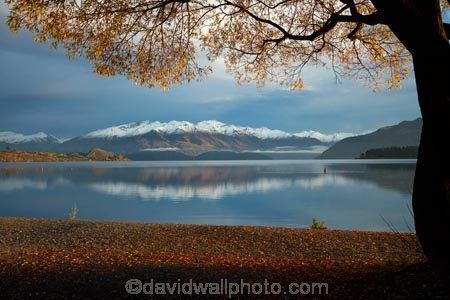 autuminal;autumn;autumn-colour;autumn-colours;autumnal;Buchanan-Mountains;Buchanan-Peaks;calm;Central-Otago;cloud;clouds;cloudy;color;colors;colour;colours;deciduous;fall;gold;golden;lake;Lake-Wanaka;lakes;leaf;leaves;mountain;mountains;N.Z.;New-Zealand;NZ;Otago;overcast;placid;quiet;reflected;reflection;reflections;season;seasonal;seasons;serene;SI;sky;smooth;snow;snow-capped;snowy;South-Island;Sth-Is;still;tranquil;tree;trees;Wanaka;water;willow;willow-tree;willow-trees;willows;yellow
