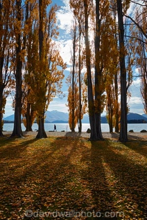 autuminal;autumn;autumn-colour;autumn-colours;autumn-leaves;autumnal;avenue;avenues;Central-Otago;color;colors;colour;colours;deciduous;fall;gold;golden;lake;Lake-Wanaka;lakes;leaf;leaves;N.Z.;New-Zealand;NZ;Otago;poplar;poplar-tree;poplar-trees;poplars;S.I.;season;seasonal;seasons;shadow;shadows;SI;South-Island;Southern-Lakes;Southern-Lakes-District;Southern-Lakes-Region;Sth-Is;tree;trees;trunk;trunks;Wanaka;yellow;model-released;model-release