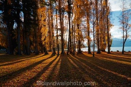 autuminal;autumn;autumn-colour;autumn-colours;autumn-leaves;autumnal;avenue;avenues;Central-Otago;color;colors;colour;colours;deciduous;fall;gold;golden;lake;Lake-Wanaka;lakes;leaf;leaves;N.Z.;New-Zealand;NZ;Otago;poplar;poplar-tree;poplar-trees;poplars;S.I.;season;seasonal;seasons;shadow;shadows;SI;South-Island;Southern-Lakes;Southern-Lakes-District;Southern-Lakes-Region;Sth-Is;tree;trees;trunk;trunks;Wanaka;yellow
