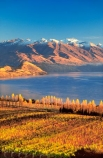 autumn;color;colors;colour;colours;crop;crops;cultivation;fall;farm;farming;farms;field;fields;grape;grapes;grapevine;horticulture;lake;lakes;leaf;leaves;mountain;mountains;n.z;n.z.;new-zealand;nz;otago;row;rows;rural;vine;vine,-vines,-vineyard,-vineyards,-wine,-wines,-winery,-wineries,;vines;vineyard;vineyards;vintage;wine;wineries;winery;wines