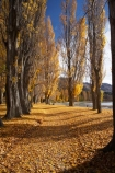 autuminal;autumn;autumn-colour;autumn-colours;autumn-leaves;autumnal;avenue;avenues;Central-Otago;color;colors;colour;colours;deciduous;fall;golden;Lake-Wanaka;leaf;leaves;N.Z.;New-Zealand;NZ;Otago;poplar;poplar-tree;poplar-trees;poplars;S.I.;season;seasonal;seasons;SI;South-Island;Southern-Lakes;Southern-Lakes-District;Southern-Lakes-Region;tree;trees;trunk;trunks;Wanaka;yellow