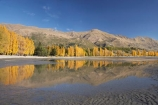 autuminal;autumn;autumn-colour;autumn-colours;autumnal;calm;Central-Otago;color;colors;colour;colours;deciduous;fall;golden;lake;Lake-Wanaka;lakes;Mount-Alpha;Mt-Alpha;Mt.-Alpha;N.Z.;New-Zealand;NZ;Otago;placid;poplar;poplar-tree;poplar-trees;poplars;quiet;reflection;reflections;S.I.;season;seasonal;seasons;serene;SI;smooth;South-Is.;South-Island;Southern-Lakes;Southern-Lakes-District;Southern-Lakes-Region;still;tranquil;tree;trees;Wanaka;water;yellow