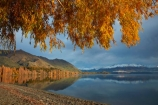 autuminal;autumn;autumn-colour;autumn-colours;autumnal;Buchanan-Mountains;Buchanan-Peaks;calm;Central-Otago;cloud;clouds;cloudy;color;colors;colour;colours;deciduous;fall;gold;golden;gray;grey;lake;Lake-Wanaka;lakes;leaf;leaves;mountain;mountains;N.Z.;New-Zealand;NZ;Otago;overcast;placid;poplar;poplar-tree;poplar-trees;poplars;quiet;reflected;reflection;reflections;season;seasonal;seasons;serene;SI;sky;smooth;snow;snow-capped;snowy;South-Island;Sth-Is;still;tranquil;tree;trees;Wanaka;water;willow;willow-tree;willow-trees;willows;yellow
