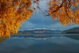 autuminal;autumn;autumn-colour;autumn-colours;autumnal;Buchanan-Mountains;Buchanan-Peaks;calm;Central-Otago;cloud;clouds;cloudy;color;colors;colour;colours;deciduous;fall;gold;golden;gray;grey;lake;Lake-Wanaka;lakes;leaf;leaves;mountain;mountains;N.Z.;New-Zealand;NZ;Otago;overcast;placid;quiet;reflected;reflection;reflections;season;seasonal;seasons;serene;SI;sky;smooth;snow;snow-capped;snowy;South-Island;Sth-Is;still;tranquil;tree;trees;Wanaka;water;willow;willow-tree;willow-trees;willows;yellow