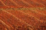 bronze;color;colors;colour;colours;crop;crops;cultivation;farm;farming;farms;field;fields;grape;grapes;grapevine;horticulture;orange;pattern;patterns;red;row;rows;rural;vine;vines;vineyard;vineyards;vintage;wine;wineries;winery;wines;winter