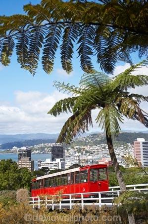 cable-car;cable-cars;cable-way;cable-ways;cable_car;cable_cars;cable_way;cable_ways;cablecar;cablecars;cableway;cableways;capital;capitals;cyathea;fern;ferns;frond;fronds;historic;historical;history;Kelburn;N.I.;N.Z.;New-Zealand;NI;North-Is;North-Island;NZ;plant;plants;ponga;pongas;public-transport;public-transportation;punga;pungas;rail;rails;tourism;tourist;tourist-attraction;tourist-attractions;tourist-ride;tourist-rides;tram;tram-car;tram-cars;tram_car;tram_cars;tram_way;tram_ways;tramcar;tramcars;trams;tramway;tramways;transport;tree-fern;tree-ferns;Welington-Cable-Car;Welington-Cable_Car;Wellington