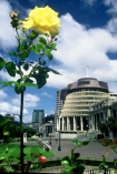 roses;flower;flowers;yellow;capital;government;historical;historic;member;members;cabinet;mp;mps;prime;minister