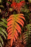 fern;ferns;forest;forestry;forests;green;lush;native-bush;red