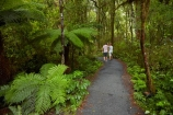 Beech-Forest;bush;fern;ferns;forest;forests;green;Haast-Pass;hiking-path;hiking-paths;hiking-trail;hiking-trails;lush;model-release;model-released;Mount-Aspiring-National-Park;MR;Mt-Aspiring-N.P.;Mt-Aspiring-National-Park;Mt-Aspiring-NP;N.Z.;national-park;national-parks;native-bush;native-forest;native-forests;native-tree;native-trees;native-woods;natural;nature;New-Zealand;NZ;path;paths;pathway;pathways;people;person;Pleasant-Flat;Pleasant-Flat-Bush-Walk;Pleasant-Flat-track;S.I.;SI;South-Is;South-Island;Sth-Is;tourism;tourist;tourists;track;tracks;trail;trails;tramping-trail;tramping-trails;tree;trees;verdant;walking-path;walking-paths;walking-trail;walking-trails;walkway;walkways;West-Coast;Westland;wood;woods