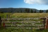 agricultural;agriculture;country;countryside;farm;farm-gate;farm-gates;farming;farmland;farms;field;fields;Fox-Glacier;gate;gates;gateway;gateways;lichen;lichen_covered;lichens;loss;meadow;meadows;N.Z.;New-Zealand;NZ;paddock;paddocks;pasture;pastures;rural;S.I.;SI;South-Is;South-Island;Sth-Is;West-Coast;Westland