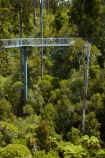 aerial-walkway;aerial-walkways;aerials-walkways;bridge;bridges;bush;canopy;canopy-walk;eco-tourism;ecotourism;elevated-walkway;elevated-walkways;engineering;forest;forest-canopy;forests;high;high-up;Hokitika;lush;luxuriant;N.Z.;native-bush;native-forest;native-forests;native-tree;native-trees;native-woods;natural;nature;New-Zealand;NZ;plant;plants;rain-forest;rain-forests;rain_forests;rainforest;rainforest-canopy;rainforest-walk;rainforests;S.I.;SI;South-Is;South-Island;steel;Sth-Is;structure;structures;tourism;tourist;tourists;travel;tree;Tree-top-Walk;Tree-top-Walkway;tree-trunk;tree-trunks;Tree_top-Walk;Tree_top-Walkway;trees;Treetop-Walk;Treetop-Walkway;walkway;walkways;West-Coast;West-Coast-Treetop-Walk;West-Coast-Treetop-Walkway;Westland;wood;woods