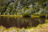alpine-tarn;alpine-tarns;bush;Canterbury;forest;forests;Hurunui-District;lake;lakes;Lewis-Pass;N.Z.;native-bush;native-forest;native-forests;native-tree;native-trees;native-woods;natural;nature;New-Zealand;NZ;S.I.;SI;South-Is;South-Island;St-James-Walkway;Sth-Is;tarn;tarns;tree;trees;West-Coast;Westland;wood;woods