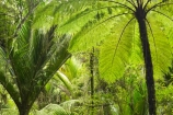 beautiful;beauty;bush;endemic;fern;ferns;forest;forests;green;native;native-bush;natives;natural;nature;New-Zealand;nikau;nikau-palm;nikaus;Nothofagus;Paparoa-National-Park;ponga;pongas;Punakaiki;punga;pungas;rain-forest;rain-forests;rain_forest;rain_forests;rainforest;rainforests;scene;scenic;South-Island;southern-beeches;tree;tree-fern;tree-ferns;trees;Truman-Track;West-Coast;westland
