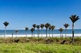 beach;coast;coastal;New-Zealand;Nikau;nikau-palm;Nikau-Palms;palm;palm-tree;palm-trees;palms;South-Island;tree;trees;west-coast;westland