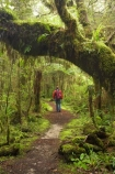 beautiful;beauty;bush;endemic;fern;ferns;forest;forests;green;hike;hiker;hikers;hiking;Kahurangi-National-Park;Karamea;lush;Moira-Gate-Arch;moss;mosses;mossy;national-park;national-parks;native;native-bush;natives;natural;nature;New-Zealand;Nothofagus;Oparara-Basin;people;person;ponga;pongas;punga;pungas;rain-forest;rain-forests;rain_forest;rain_forests;rainforest;rainforests;scene;scenic;South-Island;southern-beeches;timber;Track;tracks;tree;tree-fern;tree-ferns;tree-trunk;tree-trunks;trees;trunk;trunks;verdant;walker;walkers;walking;walking-track;walking-tracks;West-Coast;Westland;wood;woods