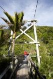 bridge;bridges;foot-bridge;foot-bridges;footbridge;footbridges;Great-Walk;Great-Walks;Heaphy-Track;hike;hiker;hikers;hiking;hiking-track;hiking-tracks;Kahurangi-National-Park;Karamea;Kohaihai-River;national-park;national-parks;New-Zealand;nikau;nikau-palm;nikaus;pedestrian-bridge;pedestrian-bridges;people;person;rivers;South-Island;suspension-bridge;suspension-bridges;swing-bridge;swing-bridges;track;tracks;walker;walkers;walking;walking-track;walking-tracks;West-Coast;Westland;wire-bridge;wire-bridges
