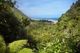 beautiful;beauty;bush;endemic;fern;ferns;forest;forests;Great-Walk;green;Heaphy-Track;Kahurangi-National-Park;Karamea;Kohaihai-River;lush;national-park;national-parks;native;native-bush;natives;natural;nature;New-Zealand;nikau;nikau-palm;nikaus;Nothofagus;ocean;oceans;ponga;pongas;punga;pungas;rain-forest;rain-forests;rain_forest;rain_forests;rainforest;rainforests;scene;scenic;sea;seas;South-Island;southern-beeches;Tasman-Sea;tree;tree-fern;tree-ferns;trees;verdant;View;views;West-Coast;Westland