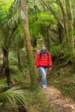 beautiful;beauty;bush;endemic;fern;ferns;forest;forests;Great-Walk;green;Heaphy-Track;hike;hiker;hikers;hiking;Kahurangi-National-Park;Karamea;lush;national-park;national-parks;native;native-bush;natives;natural;nature;New-Zealand;nikau;nikau-palm;nikaus;Nothofagus;people;person;ponga;pongas;punga;pungas;rain-forest;rain-forests;rain_forest;rain_forests;rainforest;rainforests;scene;scenic;South-Island;southern-beeches;tramp;tramper;trampers;tramping;tree;tree-fern;tree-ferns;trees;trek;treker;trekers;treking;trekker;trekkers;trekking;verdant;walk;walker;walkers;walking;West-Coast;Westland