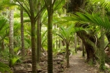 beautiful;beauty;bush;endemic;fern;ferns;forest;forests;Great-Walk;green;Heaphy-Track;Kahurangi-National-Park;Karamea;lush;national-park;national-parks;native;native-bush;natives;natural;nature;New-Zealand;nikau;nikau-palm;nikaus;Nothofagus;ponga;pongas;punga;pungas;rain-forest;rain-forests;rain_forest;rain_forests;rainforest;rainforests;scene;scenic;South-Island;southern-beeches;tree;tree-fern;tree-ferns;trees;verdant;West-Coast;Westland