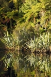 Blue-River;calm;flax;flaxes;lake;Lake-Moeraki;lakes;Moeraki-River;n.z.;native;native-bush;natural;natural-scenery;nature;new-zealand;nz;phormium;phormium-sp;placid;quiet;reflection;reflections;river;rivers;S.I.;scene;serene;SI;smooth;South-Island;still;tranquil;water;west-coast;westland