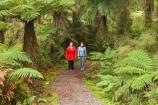 beautiful;beauty;Beech-Forest;bush;cyathea;eco-tourism;eco-tourist;eco-tourists;eco_tourism;eco_tourist;eco_tourists;ecotourism;ecotourist;ecotourists;endemic;fern;ferns;forest;forests;frond;fronds;green;heritage-area;holiday;holidaying;holidays;Lake-Moeraki-Wilderness-Lodge;N.Z.;native;native-bush;natives;natural;nature;New-Zealand;Nothofagus;NZ;people;person;ponga;pongas;punga;pungas;rain-forest;rain-forests;rain_forest;rain_forests;rainforest;rainforests;S.I.;scene;scenic;SI;South-Island;southern-beeches;te-wahi-pounamu;te-wahipounamu;te-wahipounamu-south_west-new-zealand-world-heritage-area;timber;tourism;tourist;tourists;travel;traveler;traveling;traveller;travelling;tree;tree-fern;tree-ferns;tree-trunk;tree-trunks;trees;trunk;trunks;vacation;vacationers;vacationing;vacations;West-Coast;Westland;Wilderness-Lodge-Lake-Moeraki;wood;woods;world-heirtage-site;world-heirtage-sites;world-heritage-area;world-heritage-areas