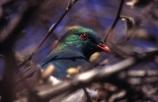 Wildlife - New Zealand