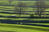 agricultural;agriculture;Britain;British-Isles;country;countryside;dry-stone-wall;dry-stone-walls;dry_stone-wall;dry_stone-walls;drystone-wall;drystone-walls;England;English-countryside;Europe;farm;farming;farmland;farms;fence;fence-line;fence-lines;fence_line;fence_lines;fenceline;fencelines;fences;field;fields;G.B.;GB;grass;Great-Britain;green;heritage;historic;livestock;Malham;meadow;meadows;North-Yorkshire;Northern-England;paddock;paddocks;pasture;pastures;rock-wall;rock-walls;rural;sheep;stock;stone-fence;stone-fences;stone-wall;stone-walling;stone-wallings;stone-walls;tradition;traditional;tree;trees;U.K.;UK;United-Kingdom;Yorkshire;Yorkshire-countryside;Yorkshire-Dales;Yorkshire-Dales-National-Park;Yorkshire-Farm;Yorkshire-Farmland;Yorkshire-Farmlands;Yorkshire-Farms