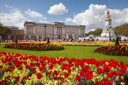 bloom;blooming;blooms;blossom;blossoming;blossoms;Britain;Buckingham-House;Buckingham-Palace;City-of-Westminster;color;colorful;colour;colourful;england;Europe;flower;flower-garden;flower-gardens;flowerbad;flowerbeds;flowers;fresh;G.B.;GB;great-britain;grow;growth;kingdom;london;Memorial-Garden;Memorial-Gardens;palace;palaces;people;person;Queen-Victoria-Memorial;Queens-Gardens;red;renew;Royal-Parks-of-London;Saint-James-Park;Saint-Jamess-Park;season;seasonal;seasons;spring;springtime;St-James-Park;St-Jamess-Park;St.-James-Park;St.-Jamess-Park;tourism;tourist;tourists;tulip;tulips;U.K.;UK;united;United-Kingdom;Victoria-Memorial;Westminster;yellow