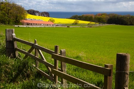 agricultural;agriculture;Berwickshire;Britain;British-Isles;country;countryside;crop;crops;Europe;farm;farming;farmland;farms;field;fields;G.B.;gate;gates;gateway;gateways;GB;Great-Britain;horticulture;meadow;meadows;Northfield-Farm;paddock;paddocks;pasture;pastures;plant;plants;rape-field;rape-fields;rapeseed;rapeseed-field;rapeseed-fields;rapeseeds;rural;Saint-Abbs;Scotland;Scottish-Borders;St-Abbs;St.-Abbs;U.K.;UK;United-Kingdom;yellow;yellow-field;yellow-fields
