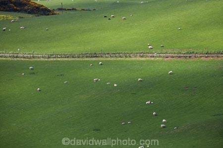 agricultural;agriculture;Berwickshire;Britain;British-Isles;country;countryside;Europe;farm;farming;farmland;farms;field;fields;G.B.;GB;Great-Britain;meadow;meadows;Northfield-Farm;paddock;paddocks;pasture;pastures;rural;Saint-Abbs;Scotland;Scottish-Borders;sheep;St-Abbs;St.-Abbs;U.K.;UK;United-Kingdom
