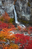 Argentina;Argentine-Patagonia;Argentine-Republic;autuminal;autumn;autumn-colour;autumn-colours;autumnal;beech;beech-tree;beech-trees;beeches;cascade;cascades;Chorrillo-del-Salto;Chorrillo-Waterfall;color;colors;colour;colours;deciduous;El-Chalten;El-Chorrillo-Waterfall;fall;falls;Glacier-National-Park;gold;golden;Latin-America;leaf;leaves;lenga;lenga-beech;lengas;Los-Glaciares;Los-Glaciares-N.P.;Los-Glaciares-National-Park;Los-Glaciares-NP;national-park;national-parks;natural;nature;Northofagus;Northofagus-pumilio;NP;orange;park;parks;Parque-Nacional-Los-Glaciares;Patagonia;Patagonian;Salto-El-Chorrillo;Santa-Cruz-Province;scene;scenic;season;seasonal;seasons;South-America;South-Argentina;Southern-Argentina;southern-beech;southern-beeches;Sth-America;travel;tree;trees;UN-world-heritage-area;UN-world-heritage-site;UNESCO-World-Heritage-area;UNESCO-World-Heritage-Site;united-nations-world-heritage-area;united-nations-world-heritage-site;water;water-fall;water-falls;waterfall;waterfalls;wet;world-heritage;world-heritage-area;world-heritage-areas;World-Heritage-Park;World-Heritage-site;World-Heritage-Sites;yellow