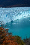 Argentina;Argentine-Patagonia;Argentine-Republic;Argentino-Lake;autuminal;autumn;autumn-colour;autumn-colours;autumnal;beech;beech-tree;beech-trees;beeches;Canal-de-los-Tempanos;cold;color;colors;colour;colours;deciduous;fall;Glaciar-Perito-Moreno;glacier;glacier-face;Glacier-National-Park;glacier-terminal-face;glacier-terminus;glaciers;gold;golden;ice;Iceberg-Channel;icefield;icefields;icy;Lago-Argentino;Latin-America;leaf;leaves;lenga;lenga-beech;lengas;Los-Glaciares;Los-Glaciares-N.P.;Los-Glaciares-National-Park;Los-Glaciares-NP;Magellanes-Peninsula;national-park;national-parks;Northofagus;Northofagus-pumilio;NP;orange;park;parks;Parque-Nacional-Los-Glaciares;Patagonia;Patagonian;Peninsula-Magellanes;Perito-Moreno;Perito-Moreno-Glacier;Santa-Cruz-Province;season;seasonal;seasons;South-America;South-Argentina;Southern-Argentina;southern-beech;southern-beeches;Sth-America;terminal-face;terminus;travel;tree;trees;UN-world-heritage-area;UN-world-heritage-site;UNESCO-World-Heritage-area;UNESCO-World-Heritage-Site;united-nations-world-heritage-area;united-nations-world-heritage-site;world-heritage;world-heritage-area;world-heritage-areas;World-Heritage-Park;World-Heritage-site;World-Heritage-Sites;yellow
